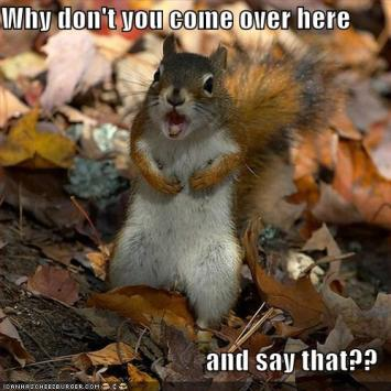 funny-pictures-angry-squirrel-leaves-screaming.jpg